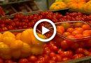Os benefícios e as receitas com tomate