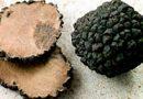 Trufas ou Cogumelos