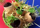 Projeto leia: Uma Aula de Ecogastronomia